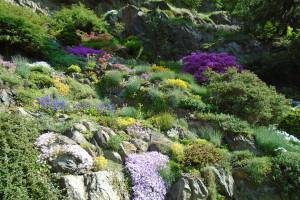 rozmanitost květů